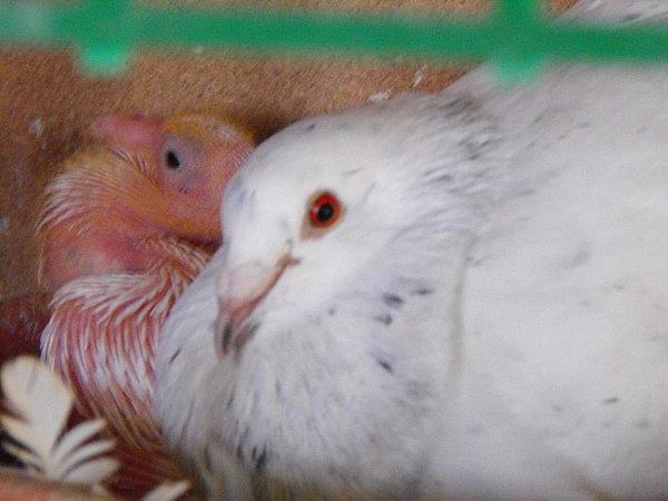 ballade-et-pigeons-a-francois-048.jpg