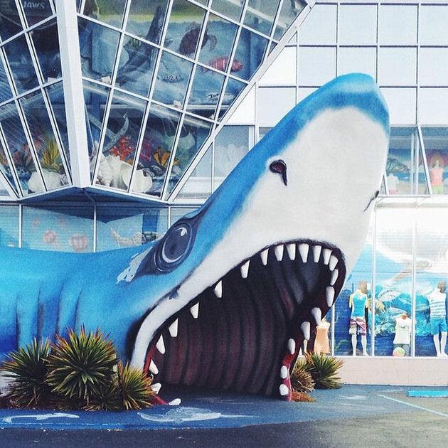Momo requin