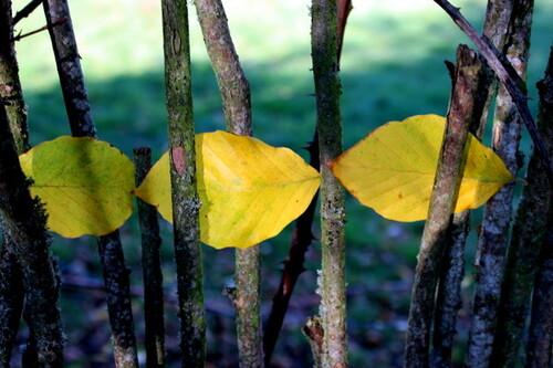 Trois feuilles