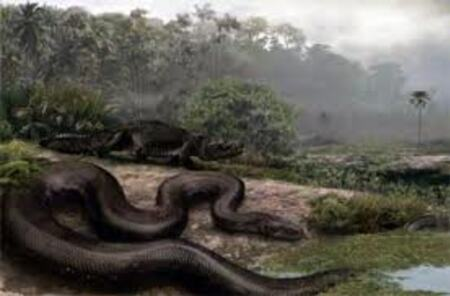 Cryptozoologie:  Un serpent géant en Amazonie
