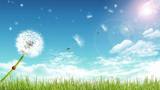 cg_design_fly_away_dandelion_under_blue_sky
