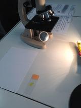 microscope paillasse svt cellules
