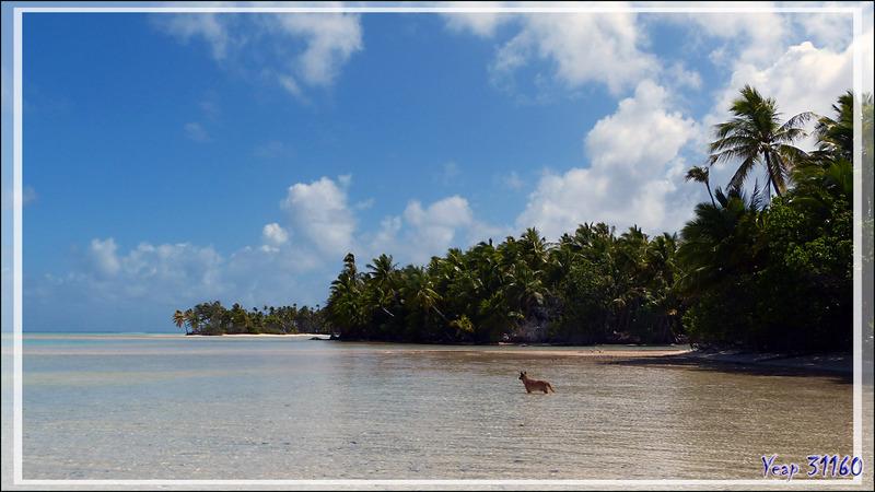 Motu au sable rose : Aïto, le chien de la pension Aïto Paradise qui nous suit partout  - Sud de Fakarava (Tetamanu) - Tuamotu - Polynésie française