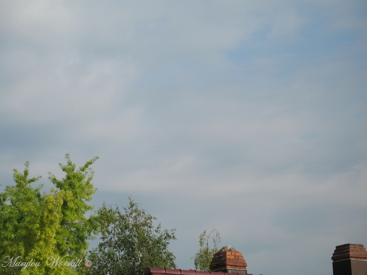 Ciel d'Alsace 278
