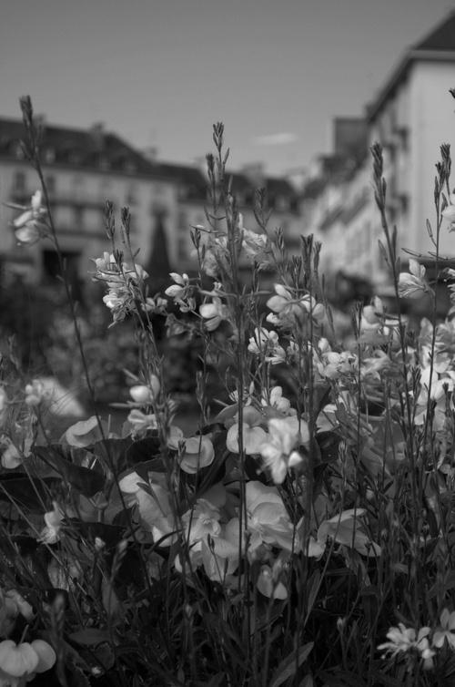Hennebont fleuries.