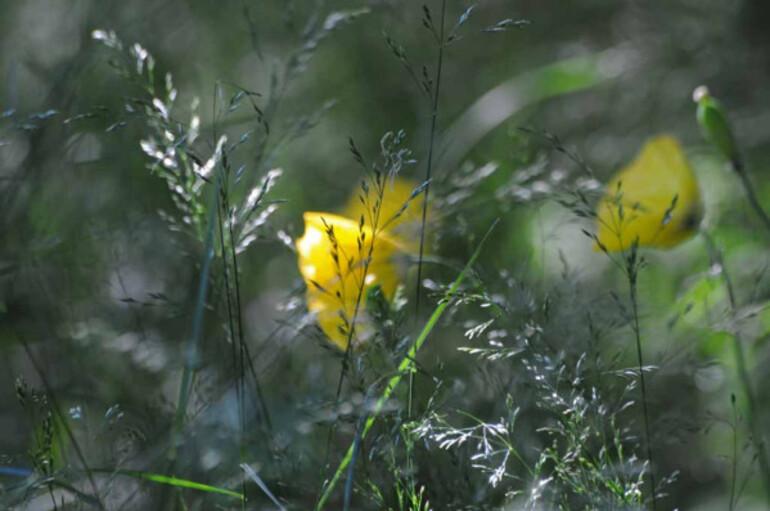Fleurs-9 8862