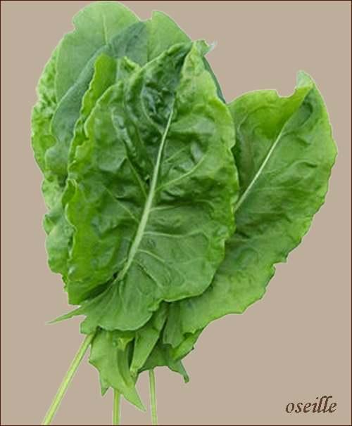 Vertus médicinales des plantes sauvages : Ortie