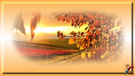 AUT0004 - Tube paysage d'automne