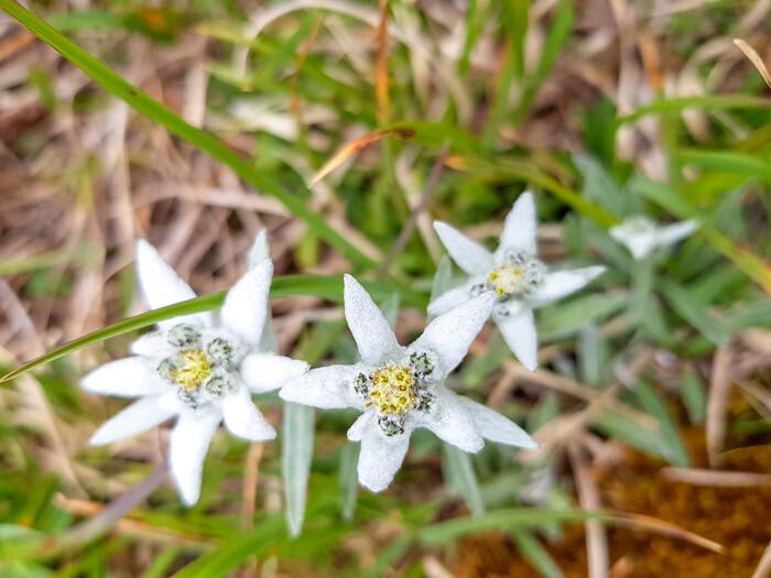 Animaux et fleurs de la Haute-Savoie en montagne