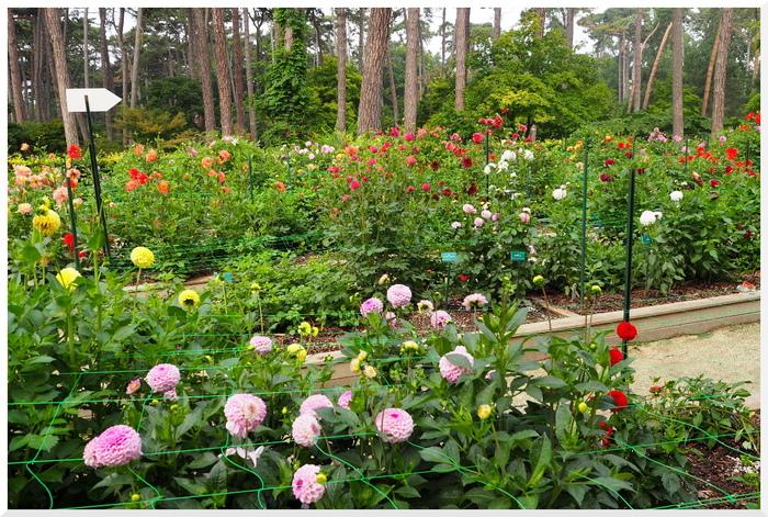 Parc Floral de Paris. Concours du Dahlia suite...