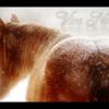 concorus money horse