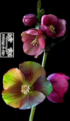 Flower's 7.