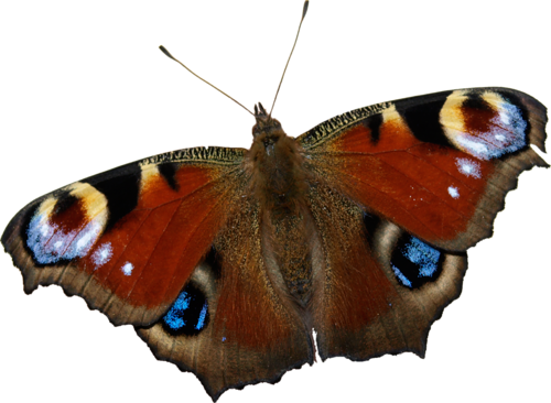 Papillons Série 2