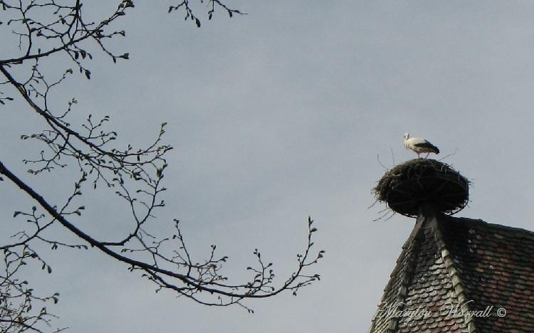 Colmar : Cigognes