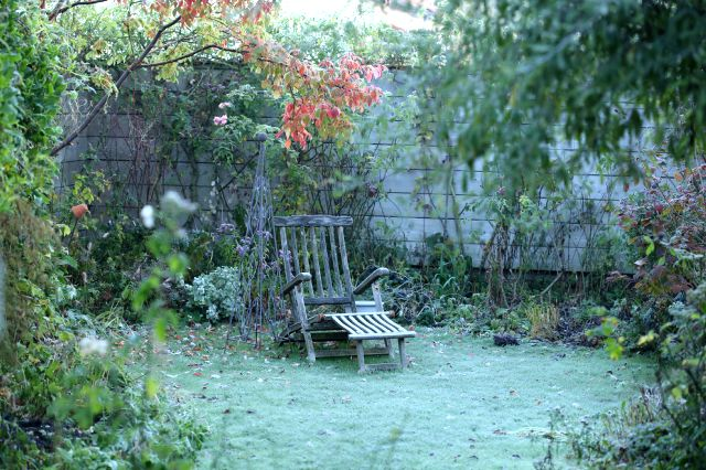 Icing sugar on the garden