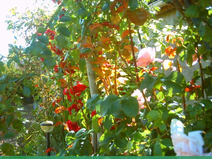 dans mon jardin(suite)