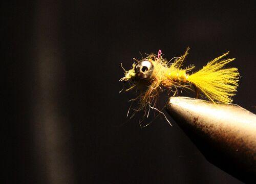 Larve de libellule