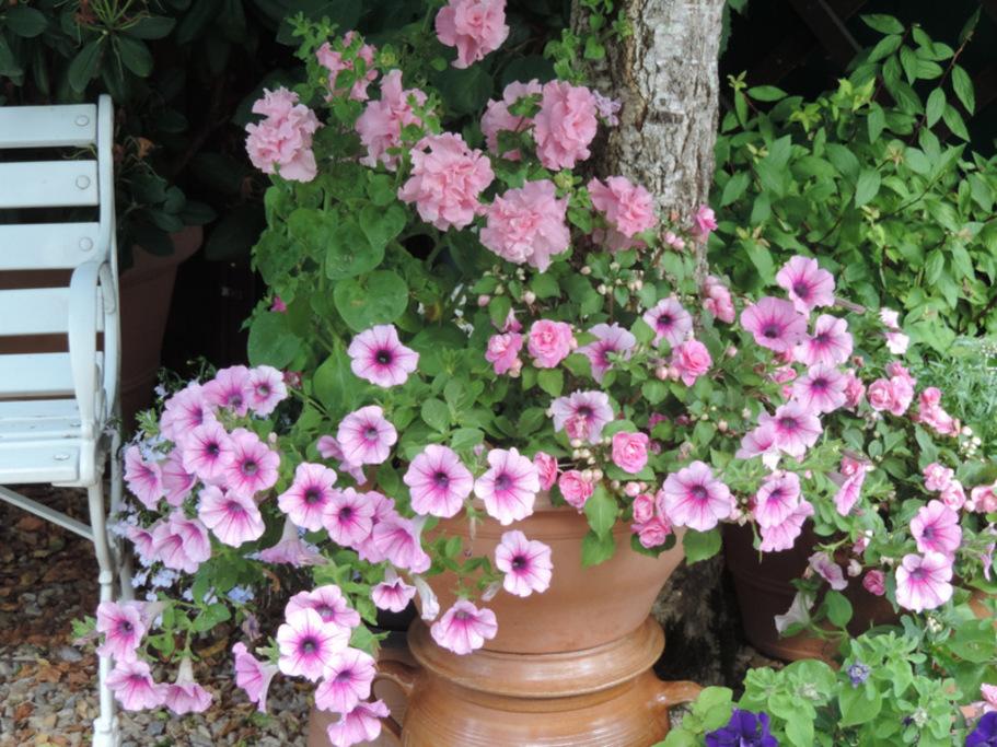 Petits plants et grosses floraisons...