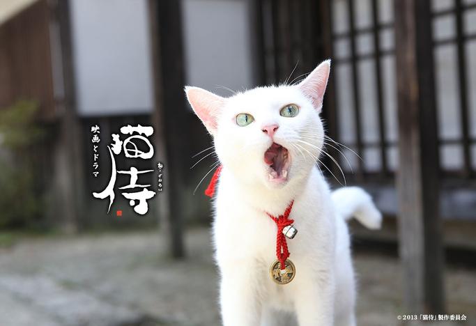 Neko Zamurai (J Drama)