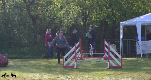 Concours Agility Moulins-Yzeure Falco