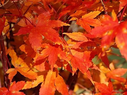 automne--2-.jpg
