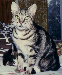 vieux-chats-tigrette.jpg