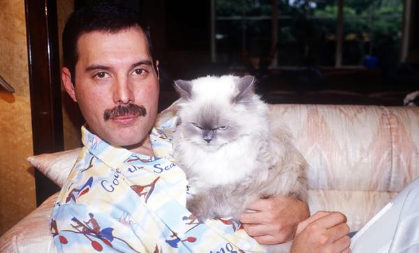 Freddie Mercury et les chats