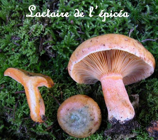 Quelques histoires de champignons, racontées par Alain Krizanot...