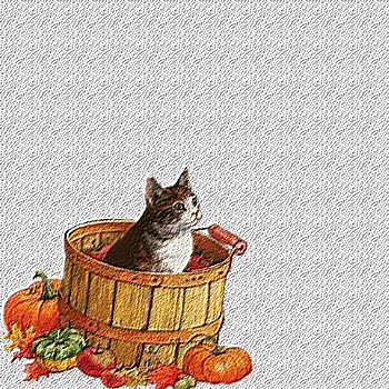 Fond de blog Halloween