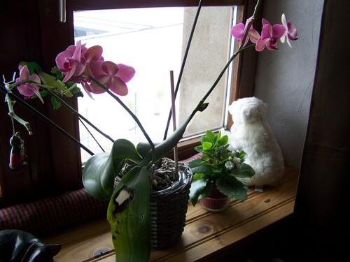 Tête à tête à l'orchidée