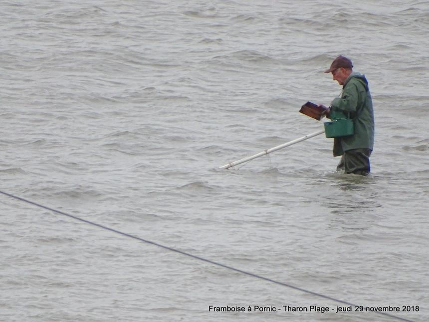 Les pêcheries de Tharon Plage - 2018