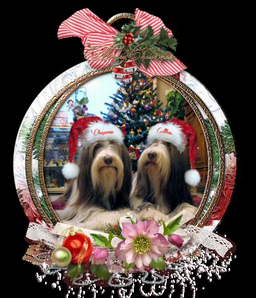 Joyeuses Fêtes de Noël ♥ Athos & Cheyenne ♥