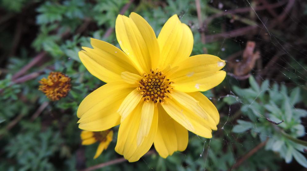des fleurs en Octobre