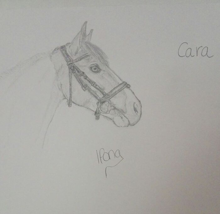 Photo de Dessin de chevaux.