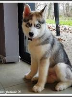 Naïko (presque 3 mois)