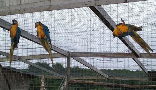 Sortie des MS au parc animalier d'Écouves