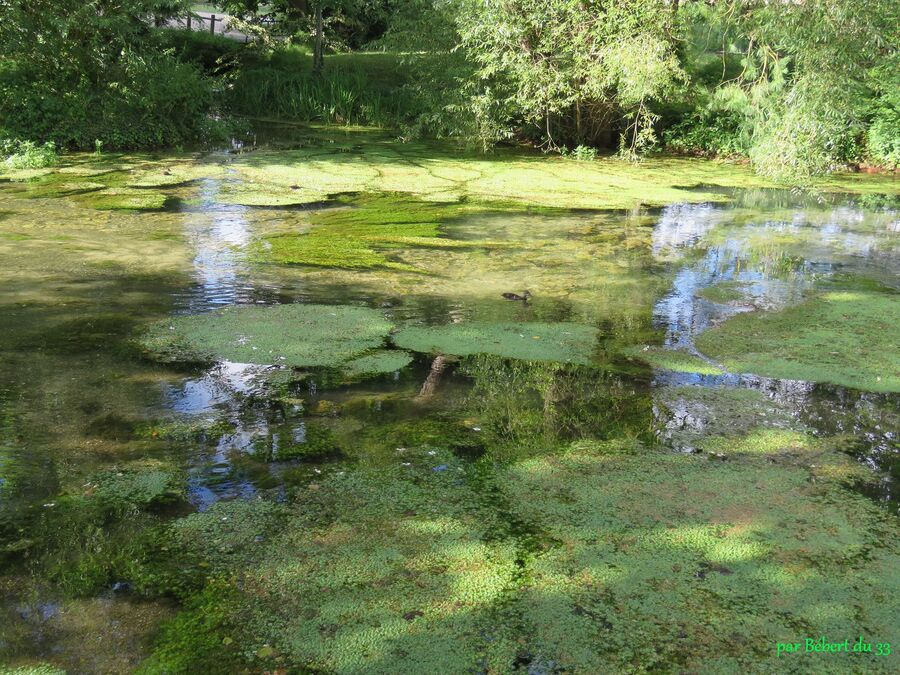 le parc de la Boulaize à Beaune - 6