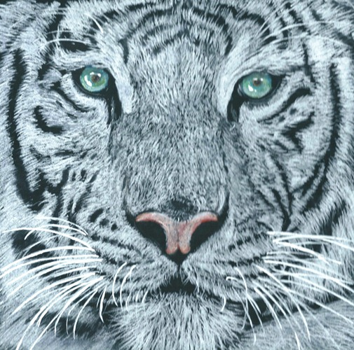 2013 ma petite galerie de dessins - Tigre blanc dessin ...