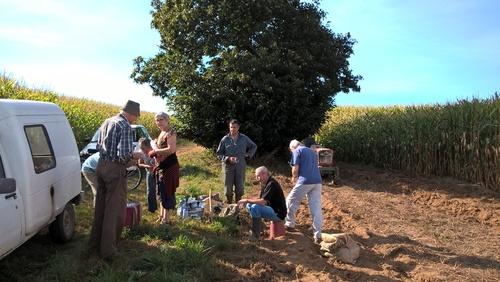 Ramassage de pommes de terre pour la chapelle de St Maur