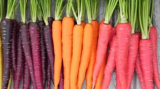 carottes-couleurs