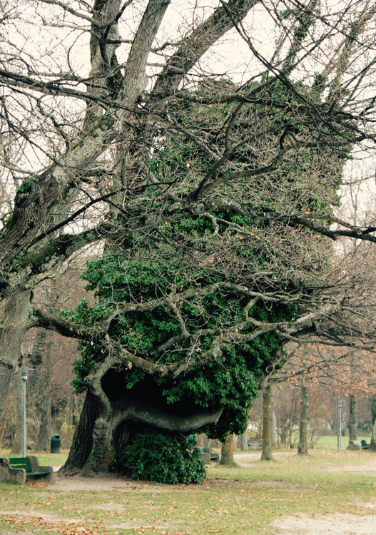 L'arbre qui voulait ressembler à Marge