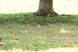 Balade à Bois Lomard