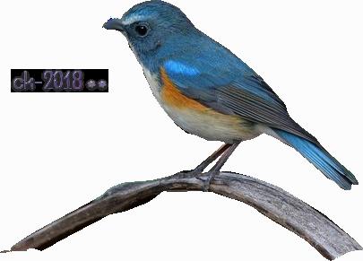Oiseaux 2018