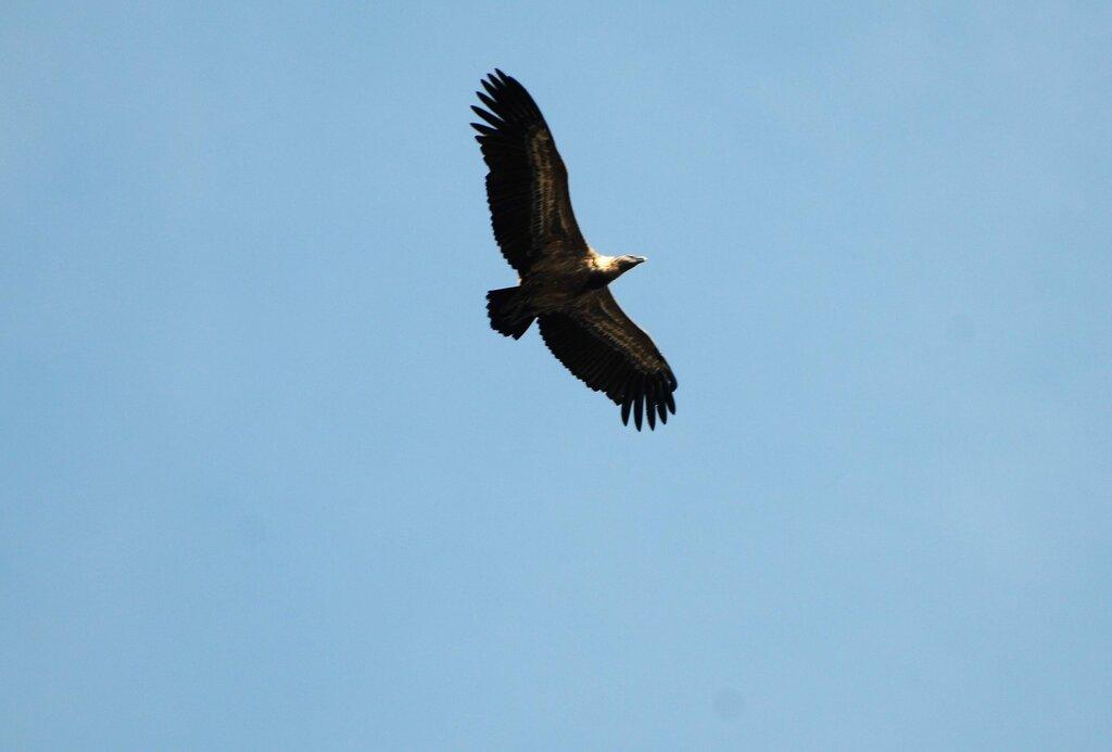 La montagne des vautours (2) suite
