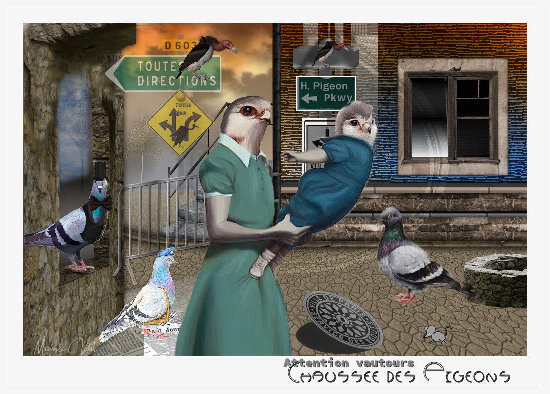 Chaussée des pigeons