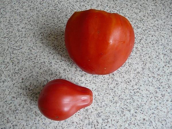 Tomates-Coeur-de-boeuf--6-11-10.jpg