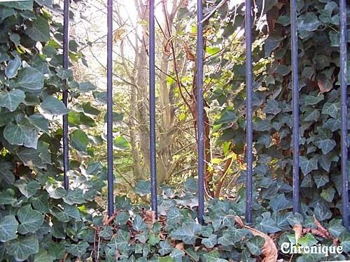 automne-derriere-les-barreaux.jpg