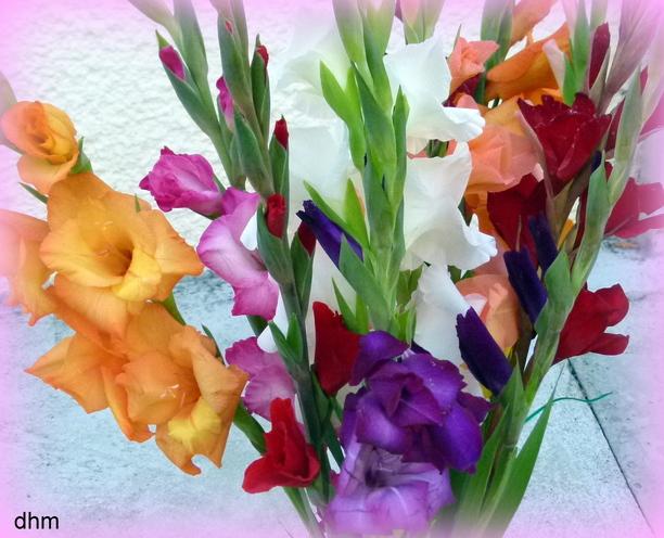 Bouquets de GLAÏEULS