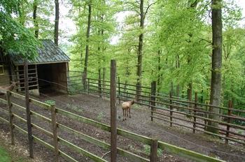 Parc animalier Bouillon 2013 enclos 154