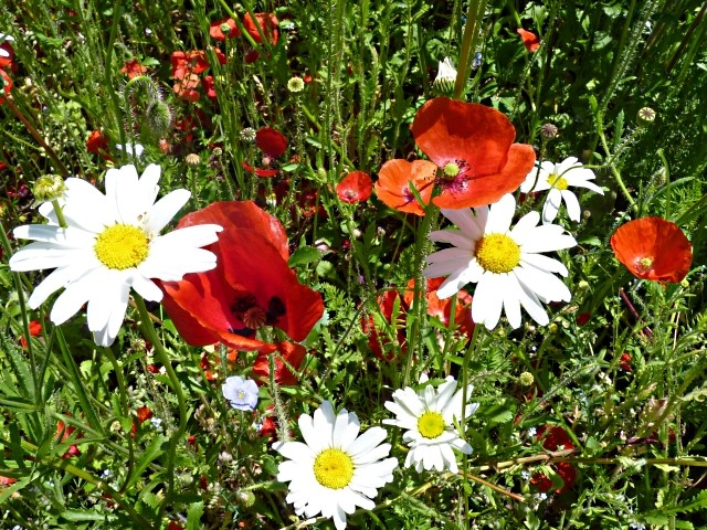 Flore lorraine 4 mp13 11 06 2010